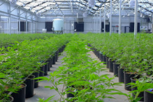 Medical Marijuana Grower Solutions